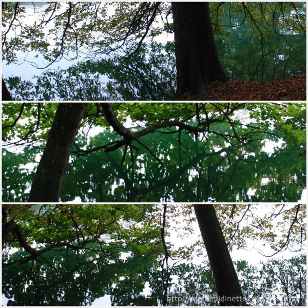 http://metalmidinette.free.fr/img/arbres-eau.jpg