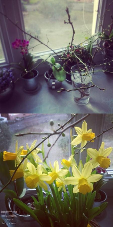 http://metalmidinette.free.fr/img/fleurs-mars.jpg
