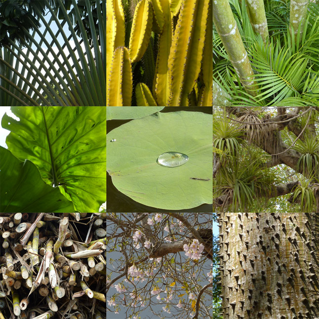 http://metalmidinette.free.fr/img/g-vegetation.jpg