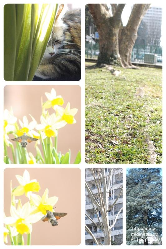 http://metalmidinette.free.fr/img/sunday-march.JPG