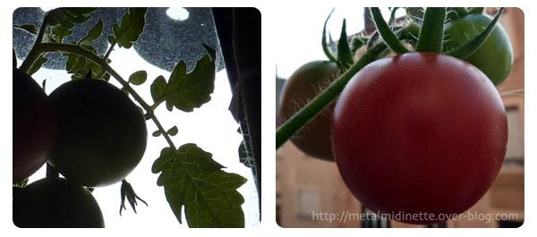 http://metalmidinette.free.fr/img/tomates-muries.jpg